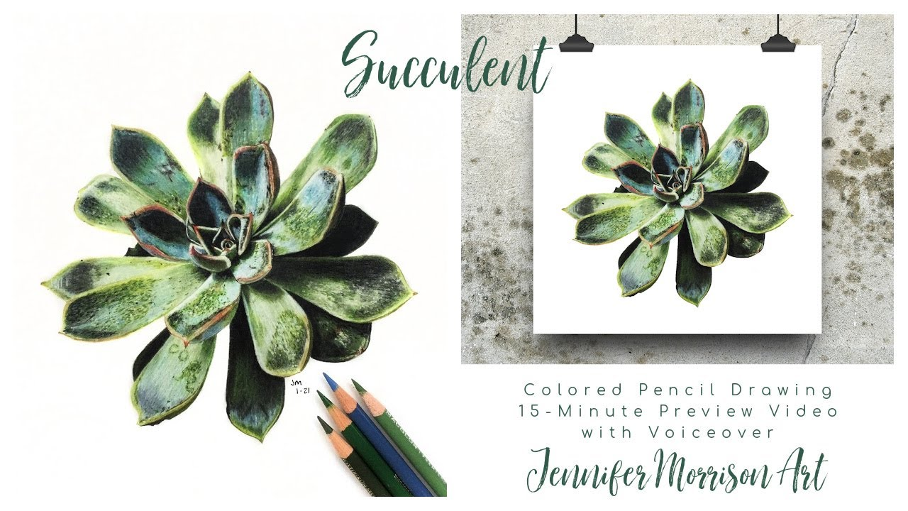 Succulent Colored Pencil Drawing Preview Video Jennifer Morrison Art On Patreon